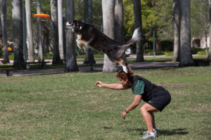 Dale and Xena doing their disc dog routine