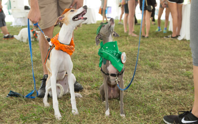 Dog Boarding and Training in Miami: University of Miami Furry 'Canes Event