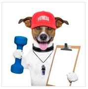 dog training miami