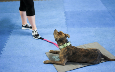 Dog Boarding and Training in Miami: FAQ's about our in-facility training programs