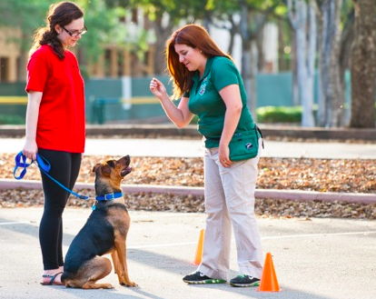 How to Become A Professional Dog Trainer: Now Accepting Applications – Apprentice Dog Trainer Positions in Miami