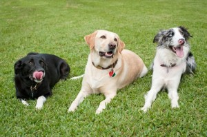 dog training and boarding miami