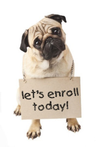 enroll dog training miami