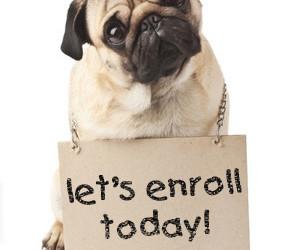 So Many Classes – Miami Dog and Puppy Training