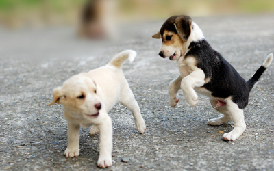 Dog Boarding and Training: Group Puppy Classes in Miami, FL