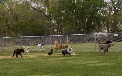 Indoor Dog Training Classes – Dog Boarding and Training Miami