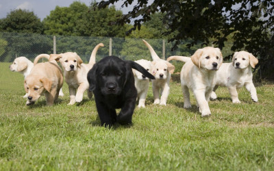 Dog Boarding and Training Miami: Group Classes with Certified Dog Trainers