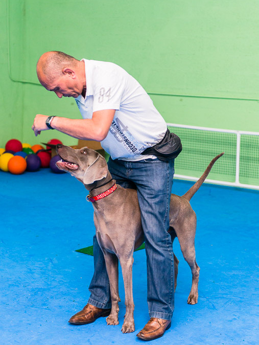 Trick Dog Workshop December 13th, 2014 – Miami, FL – Dog Training Miami