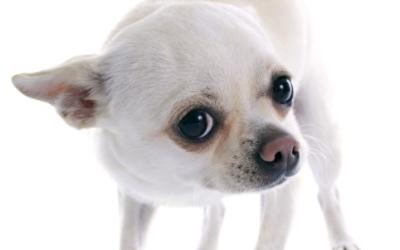 Board and Train for Dog Aggression – Dog Trainers in Miami