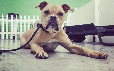 Train to Adopt – South Florida Board and Train – Miami Dog Training
