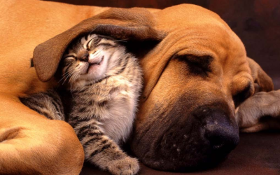 The Truth About Cats and Dogs – South Florida Dog Training