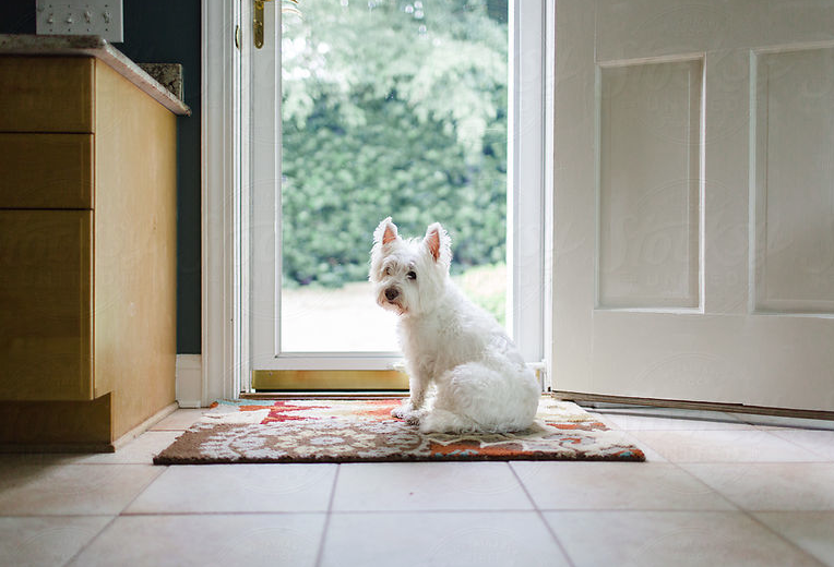Train your Dog to Wait at the Door: Preventing Door Dashing – Dog Trainers in Miami