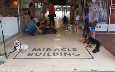 Outdoor Adventure – Obedience and Manners – Dog training in Miami