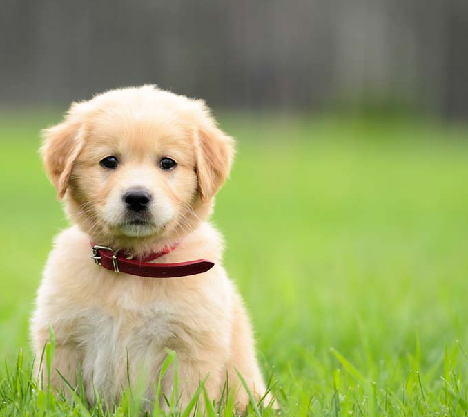 Choosing a Puppy: Making an Educated Decision