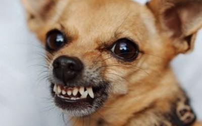 My dog is growling!