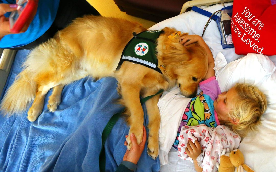 It's International Assistance Dog Week! Aug 7-13