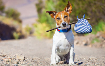 Lost Pet Prevention Tips