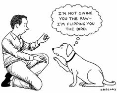 Confessions of a Dog Trainer: Your Dog is Not a Mind Reader – Dog Trainers in Florida