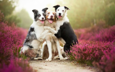 Confessions of a Dog Trainer: Love takes Time — Dog Trainers in Miami