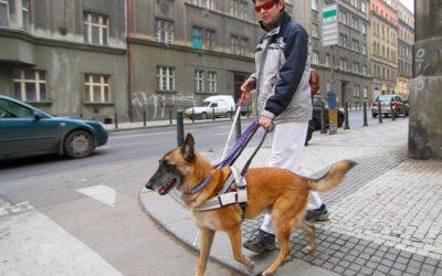 October is National Service Dog Month!