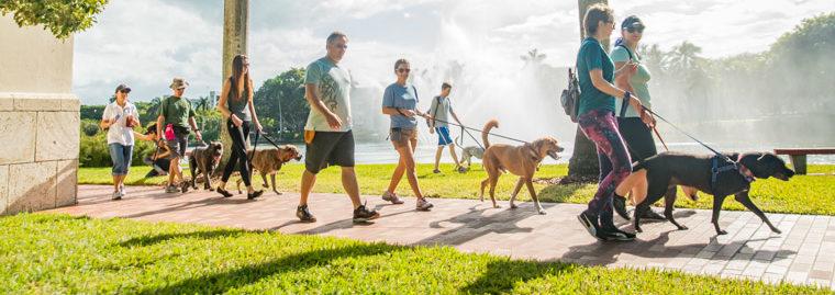 3 Dog Gone Easy New Years Resolutions – Miami Dog and Puppy Training