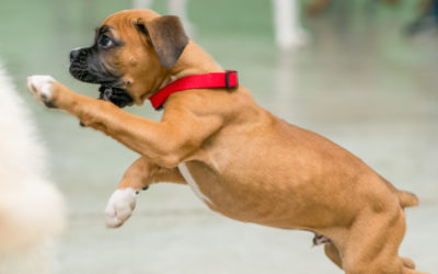 Puppy Picking: A Trainer's Guide to Finding the Right Companion