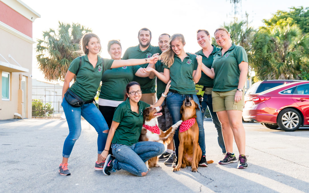 Memories of Great Dogs Last Forever – Dog and Puppy Trainers in Miami Florida
