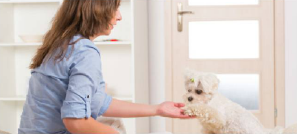 How to Train Polite Door Greetings – Miami Dog and Puppy Training