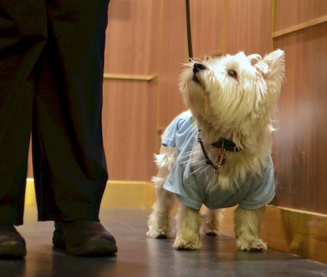 How to Train Your Dog to Behave in the Elevator – Miami Dog and Puppy Training