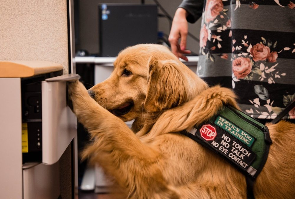 At Your Service: The Importance of Service Dog Etiquette