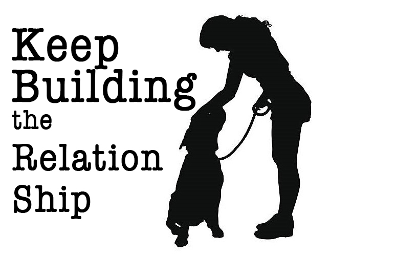 Train and Maintain: How to Keep Up with What Your Dog Has Learned