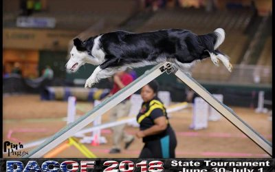Handle It! Canine Agility In Perspective