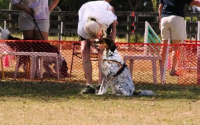 Dog Sports! But Why?