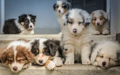 Puppy Love: What to Expect When you Bring a Puppy Home