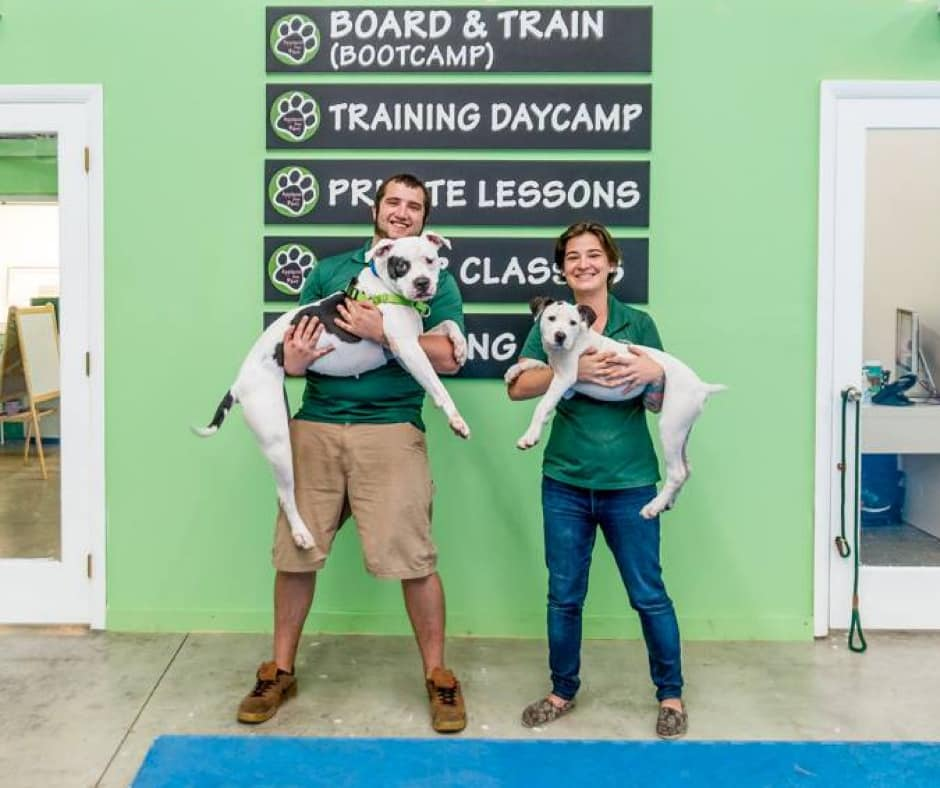 dog training miami boarding training