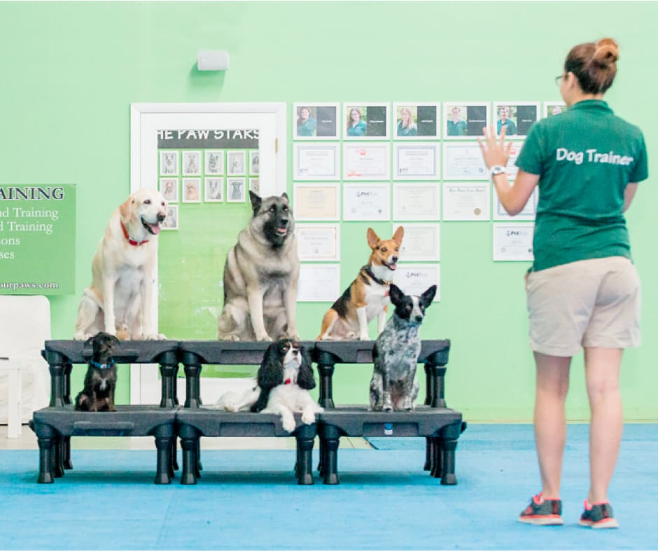 dog training miami group classes