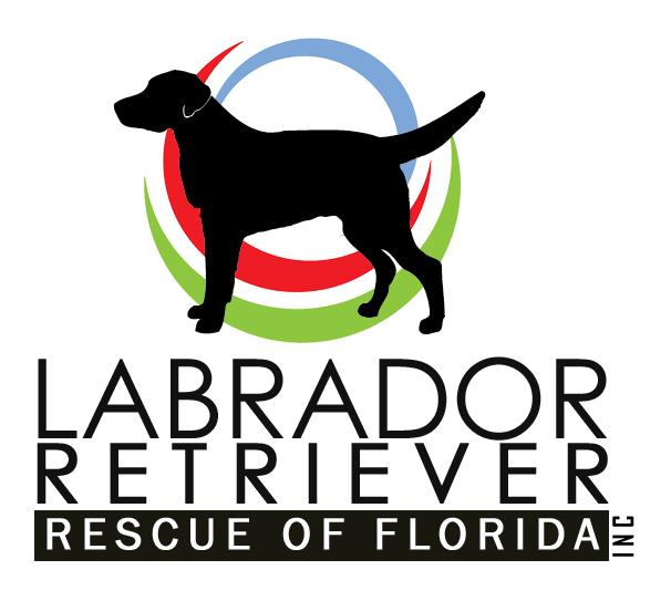 Labrador retriever rescue